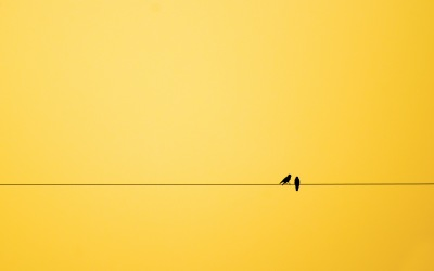 953970-minimalism-birds